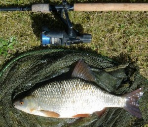 Immaculate 2lb River Test roach