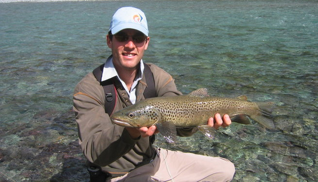 Wild Brown Trout, New Zealand South Island