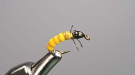 Best nymph pattern for trout