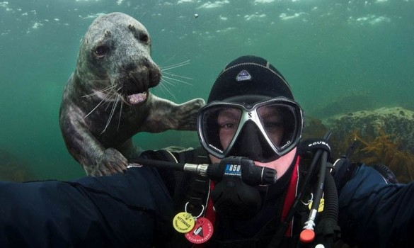 The 21 best fish and watery photobombs of all time