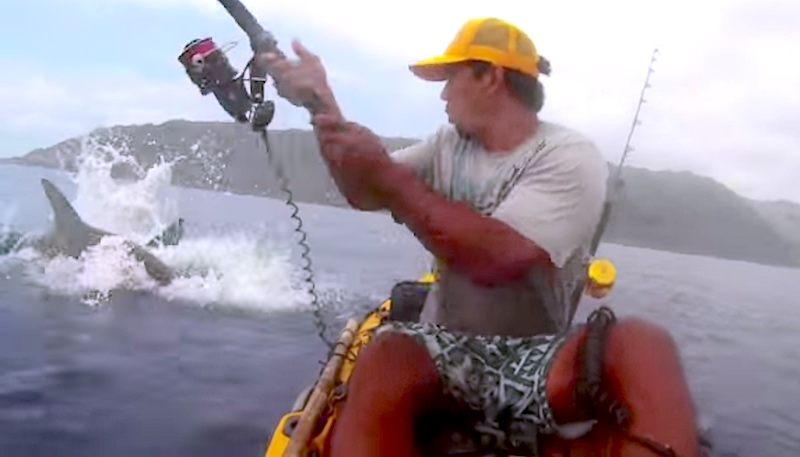 If He Knew What Was Lurking Would He Have Dared Fish From A Kayak