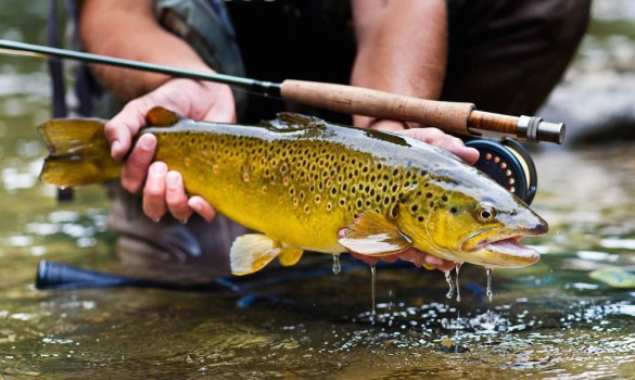 Fly Fishing in Solvenia