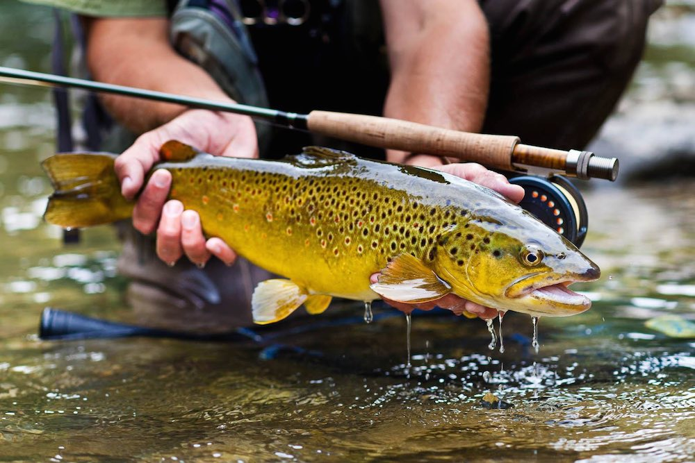 Fly fishing in solvenia drowning worms for What to use for trout fishing